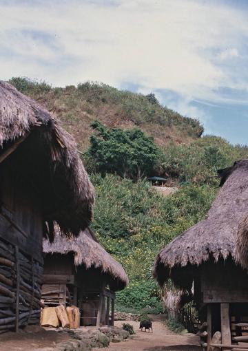 集落から見た聖樹パパッタヤン_聖樹の他に野生の樹木は皆無